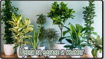 Цветя за здраве в дома