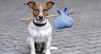 Пловдивчани тайно изхвърлят край селата домашни кучета и котки