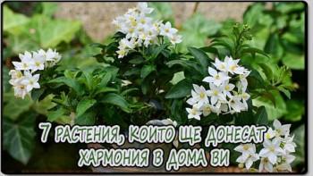 7 растения, които ще донесат хармония в дома ви