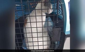 Заловиха котка, пренасяла наркотици