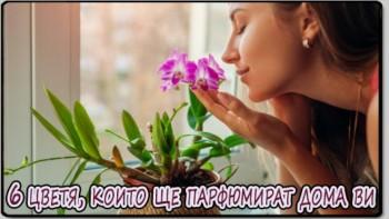 6 цветя, които ще парфюмират дома ви